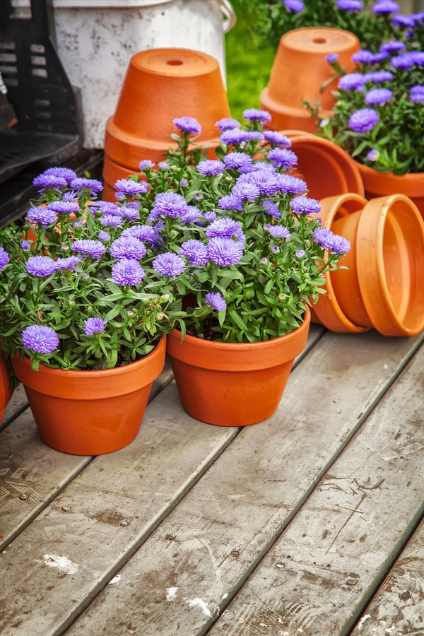 Do you know how to use baking soda in your garden. It's time to garden with baking soda, because there are 15 amazing ways it can help you. It can even help extend flower life.