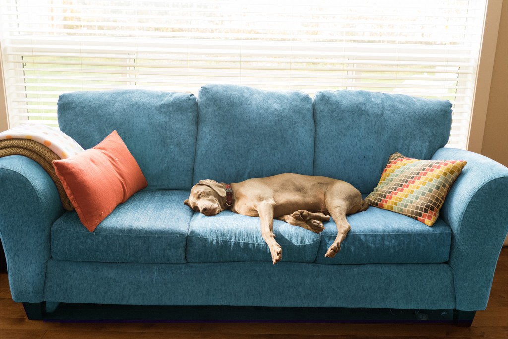 house-cleaning-tips-stinky-smells-dog-couch-standard_0e3d5001004deb3a402f43a1cdf55293