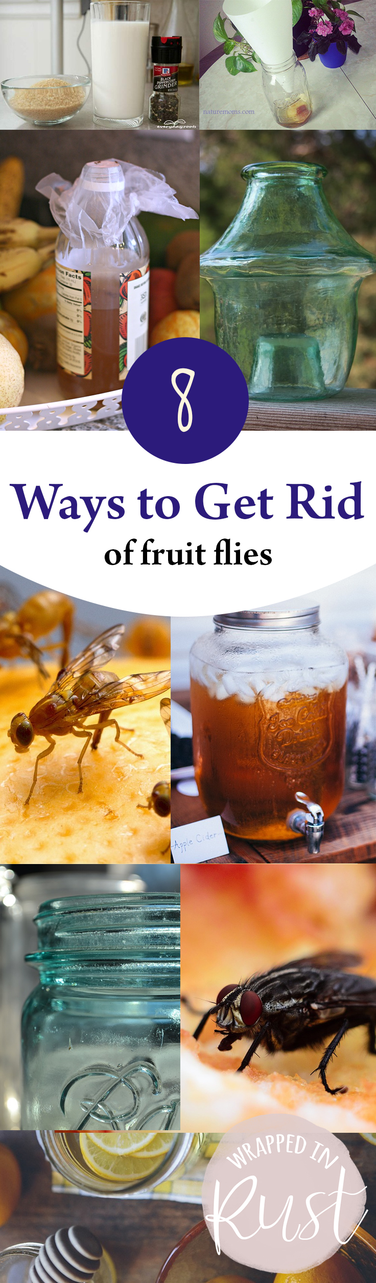 8 ways to get rid of fruit flies wrapped in rust. Black Bedroom Furniture Sets. Home Design Ideas