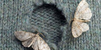 4 Ways to Get Rid of Moths| Moths, Get Rid of Moths, Get Rid of Moths In House, Get Rid of Moths in Pantry, Pest Control, DIY Pest Control #Moths #PestContol