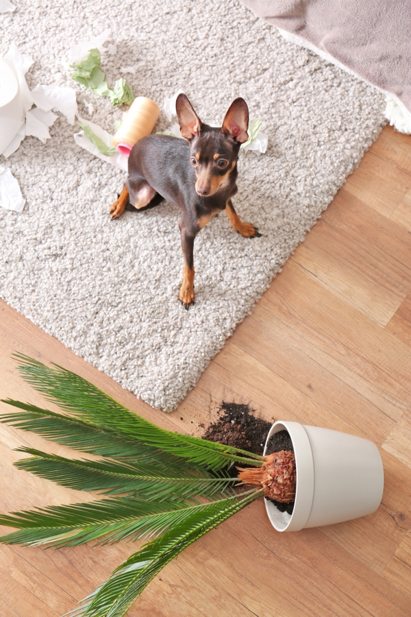 If you have a furry little friend, you'll want to know these carpet cleaning hacks. They'll change your life