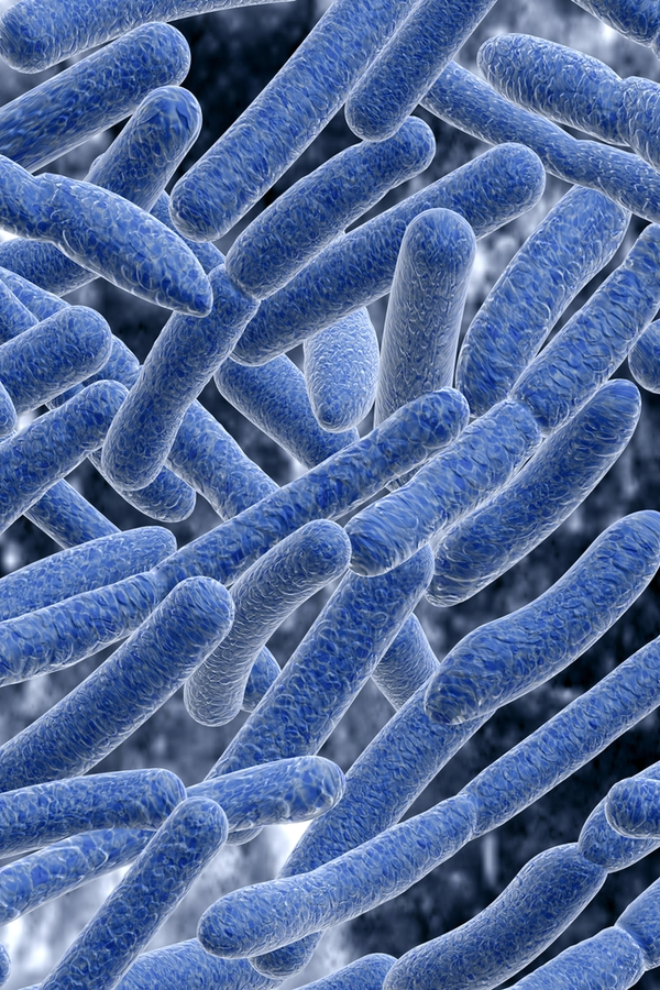 Do you know all of the household items that harbor bacteria? You'd be surprised at what holds bacteria in your home. Make sure you know what they are so you and your family are safe.